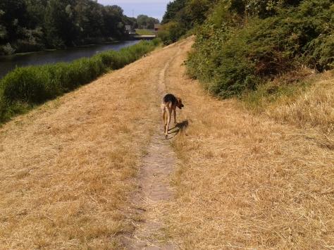 Grassy walk