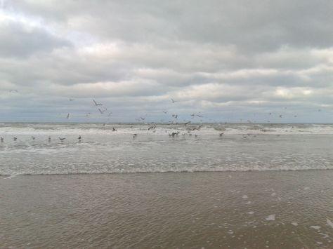 Seagulls 1