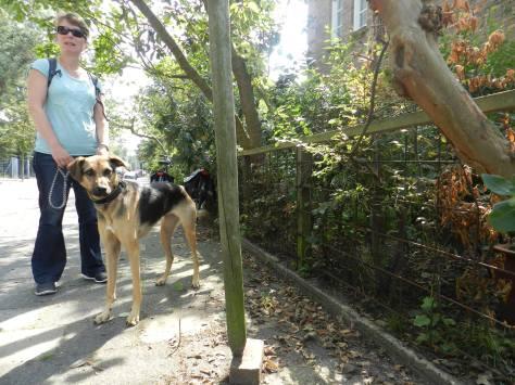 Tree-walk 2