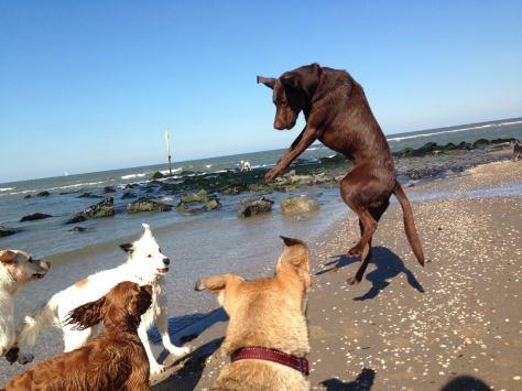 Jojo jumping