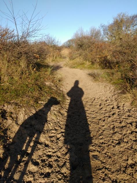 Sunny walk 1