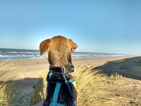 Sunny walk 3