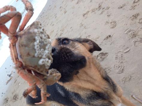 Sea food1