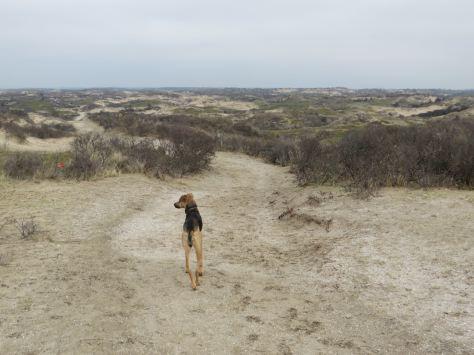 Long walk 2