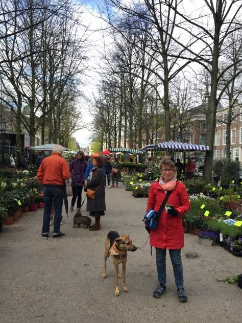 Geraniummarkt