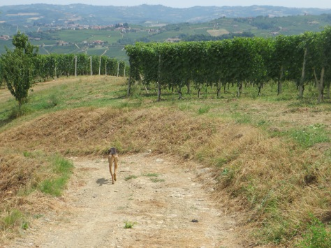 Walk in Barolo